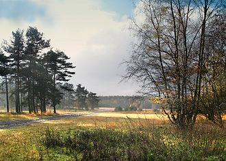 Bild von Nordrhein-Westfalen: Die Senne in Ostwestfalen-Lippe ist die bedeutendste zusammenhängende Heidelandschaft