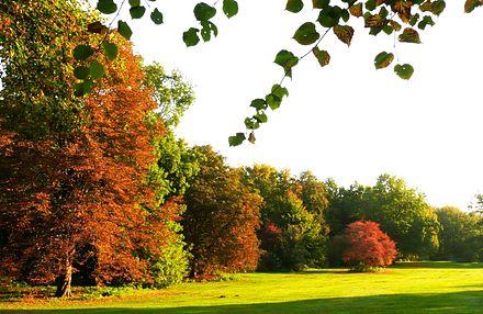 Bild von Berlin: Berlin befindet sich in einer gemäßigten Klimazone (Großer Tiergarten im Oktober)