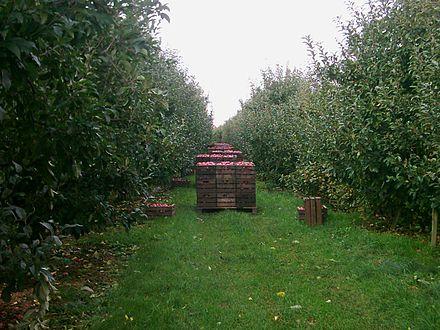 Bild von Neu Wulmstorf: Apfelernte in Rübke