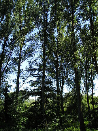 Bild von Düsseldorf: Bäume in der Urdenbacher Kämpe